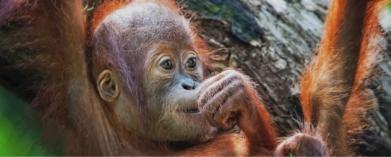 Följ med till mytomspunna Borneo