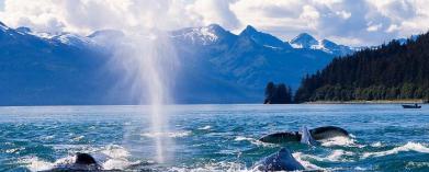 Alaska, Vancouver och kryssning längs den enormt vackra västkusten